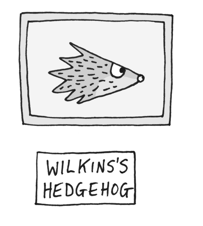 Wilkins' Hedgehog